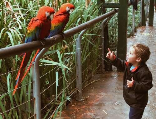 Buenos Aires com bebês e crianças: dicas e atrações!